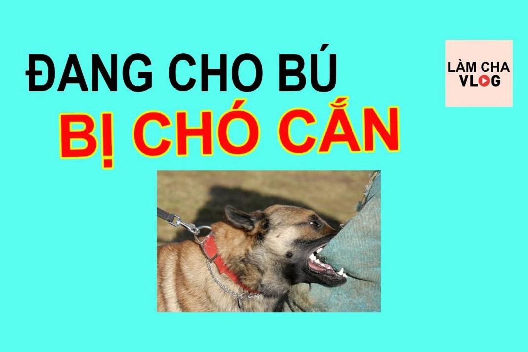 cho-can-co-cho-bu-duoc-khong
